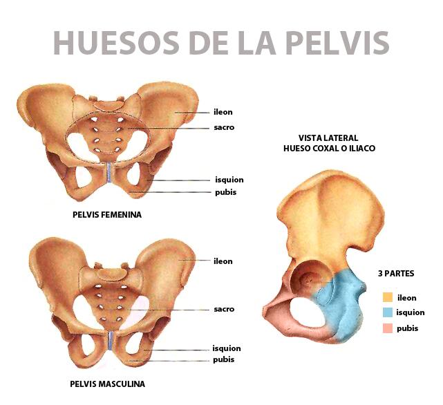 Fractura de pelvis - Dr. Julián Guerra